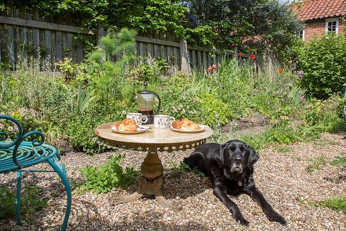 Black Labrador in Rose Cottage garden